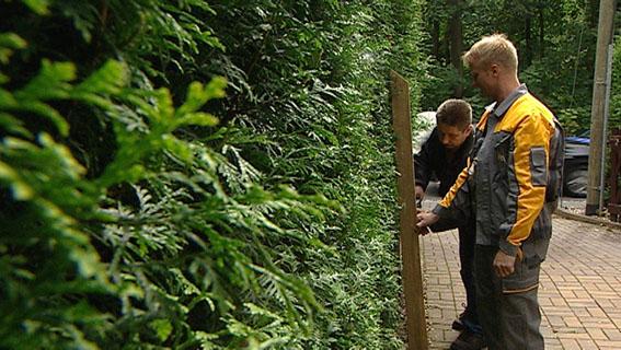 Zur Sendung Vom 12 Oktober 2010 Hecken Bäume Richtig